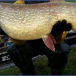 ashby canal fishing 1 150x150 Ashby Canal Fishing