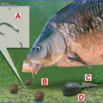 canal carp fishing tips 20 150x150 Canal Carp Fishing Tips