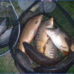 canal carp fishing 10 150x150 Canal Carp Fishing