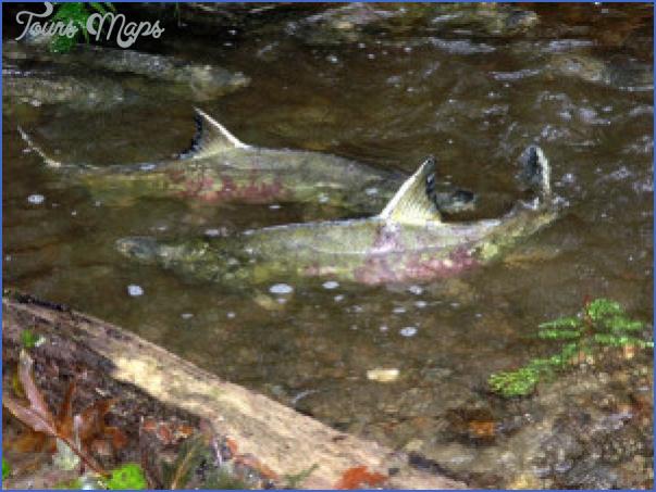 nwwfishtwo13 300x225 Salmon Fishing Hood Canal