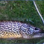 pike fishing canals 12 150x150 Pike Fishing Canals