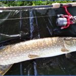 pike fishing canals 2 150x150 Pike Fishing Canals