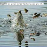 pike prey fish 150x150 Winter Canal Fishing Tips