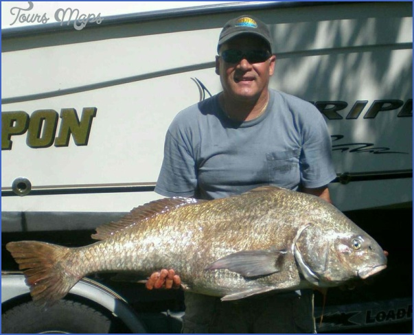 point pleasant canal fishing reports 13 Point Pleasant Canal Fishing Reports