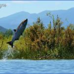 salmon jumping in the skokomish river image by doug scott 150x150 Salmon Fishing Hood Canal