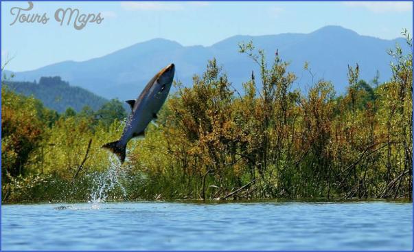 salmon jumping in the skokomish river image by doug scott Salmon Fishing Hood Canal