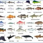 types of fish in cape coral canals 3 150x150 Types Of Fish In Cape Coral Canals
