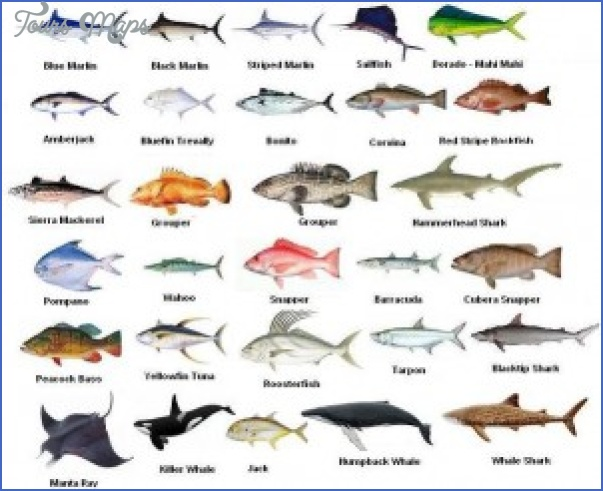 types of fish in cape coral canals 3 Types Of Fish In Cape Coral Canals