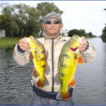 types of fish in cape coral canals 6 150x150 Types Of Fish In Cape Coral Canals