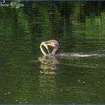 ulverston canal fishing 7 150x150 Ulverston Canal Fishing