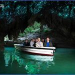 waitomo-glowworm-caves.jpg?height=432&outputformat=jpg&quality=70&source=2088456&transformationsystem=crop&width=768&securitytoken=B4B025DE98C62C40CA76DABA9491B822