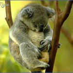 003 150x150 Australia Vacations