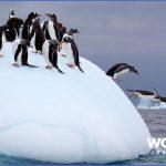 antarctic explorer cruises 18 150x150 Antarctic Explorer Cruises