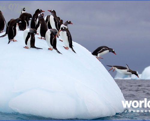 Antarctic Explorer Cruises_18.jpg