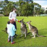 australia phillip island family with kangaroos 150x150 Australia Vacations