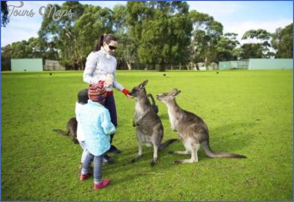australia phillip island family with kangaroos Australia Vacations