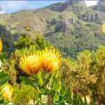 all inclusive trips to kirstenbosch national botanical garden 4 150x150 All Inclusive Trips To Kirstenbosch National Botanical Garden