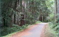 Cross Marin Trail, Bolinas Ridge Trail_0.jpg