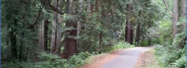Cross Marin Trail, Bolinas Ridge Trail_0.jpg