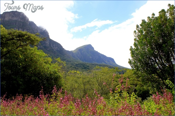 how to plan a trip to kirstenbosch national botanical garden 13 How To Plan A Trip To Kirstenbosch National Botanical Garden