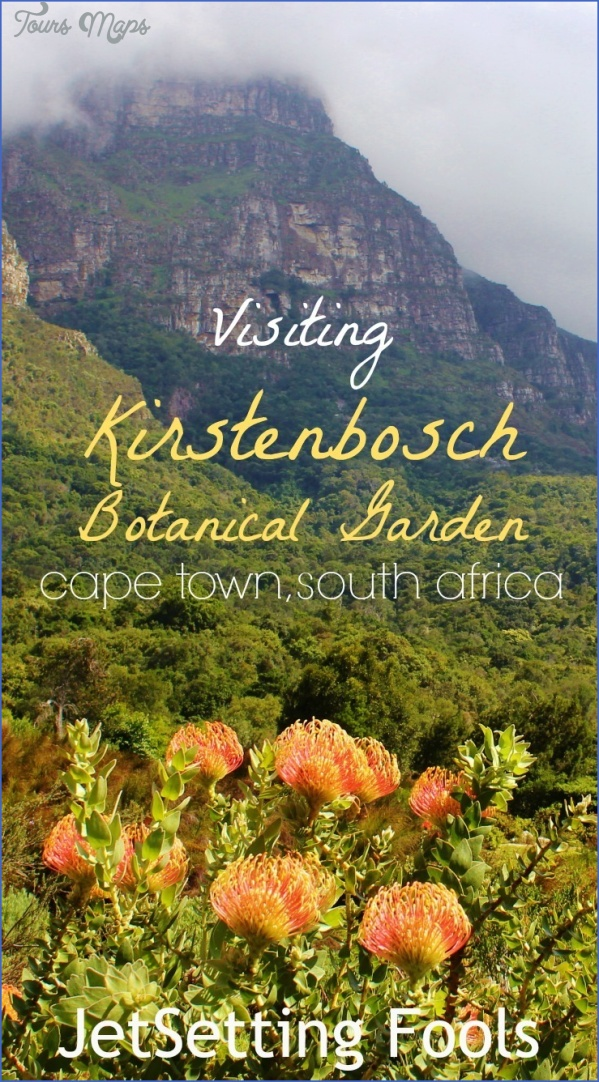 how to plan a trip to kirstenbosch national botanical garden 2 How To Plan A Trip To Kirstenbosch National Botanical Garden