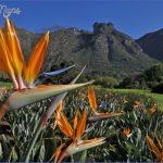 kirstenbosch national botanical garden mission trips 10 150x150 Kirstenbosch National Botanical Garden Mission Trips