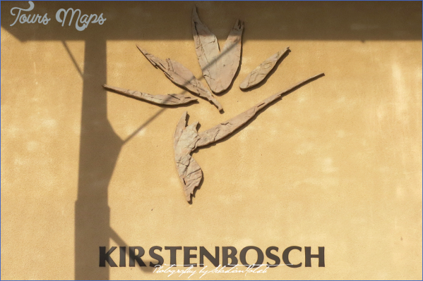 kirstenbosch national botanical garden road trip 5 Kirstenbosch National Botanical Garden Road Trip