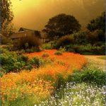 kirstenbosch national botanical garden road trip 6 150x150 Kirstenbosch National Botanical Garden Road Trip