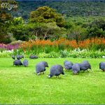 Kirstenbosch National Botanical Garden Road Trips_0.jpg