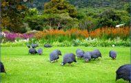 Kirstenbosch National Botanical Garden Road Trips_0.jpg