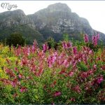 Kirstenbosch National Botanical Garden Road Trips_6.jpg