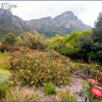 kirstenbosch national botanical garden trip advisor 12 150x150 Kirstenbosch National Botanical Garden Trip Advisor