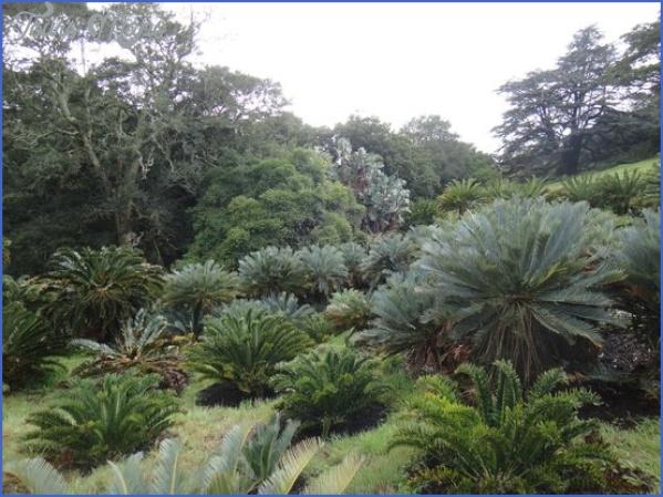 Kirstenbosch National Botanical Garden Trip Advisor_14.jpg