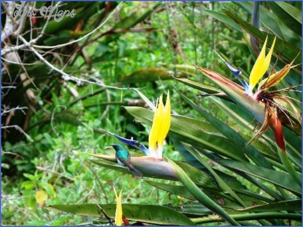 Kirstenbosch National Botanical Garden Trip Advisor_3.jpg
