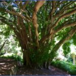 Kirstenbosch National Botanical Garden Trip Advisor_5.jpg