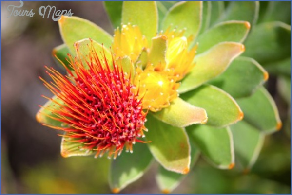 Kirstenbosch National Botanical Garden Trip Advisor_8.jpg