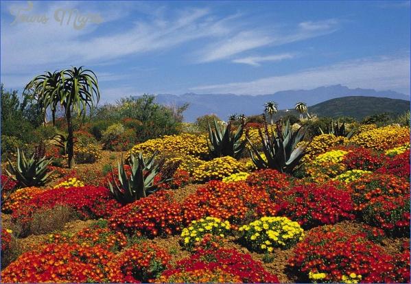 kirstenbosch national botanical garden trip deals 12 Kirstenbosch National Botanical Garden Trip Deals