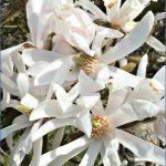 kirstenbosch national botanical garden trip itinerary 12 150x150 Kirstenbosch National Botanical Garden Trip Itinerary