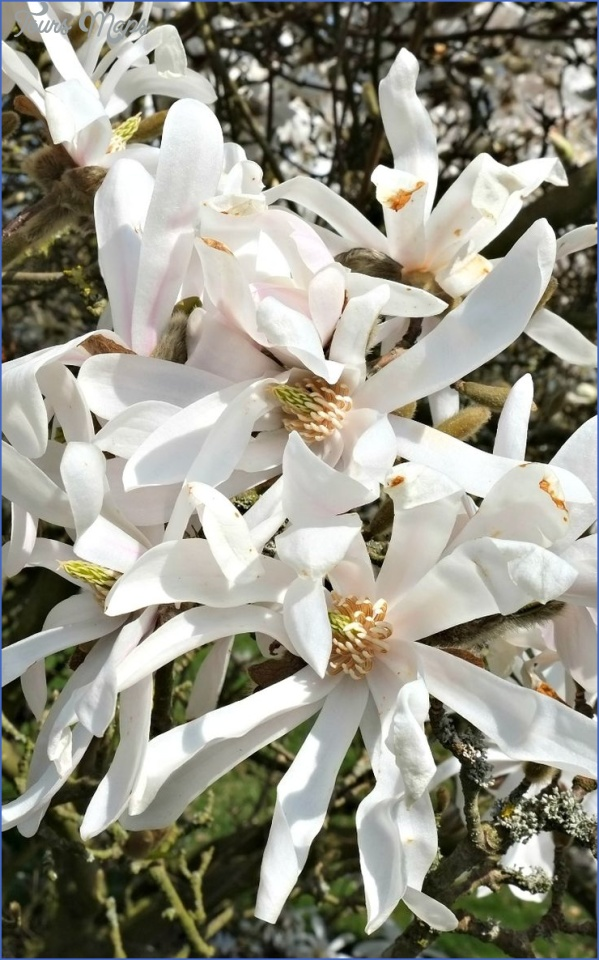 kirstenbosch national botanical garden trip itinerary 12 Kirstenbosch National Botanical Garden Trip Itinerary