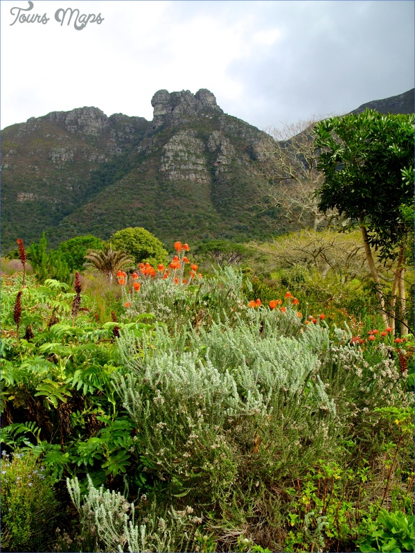 kirstenbosch national botanical garden trip itinerary 15 Kirstenbosch National Botanical Garden Trip Itinerary