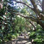 kirstenbosch national botanical garden trip itinerary 6 150x150 Kirstenbosch National Botanical Garden Trip Itinerary