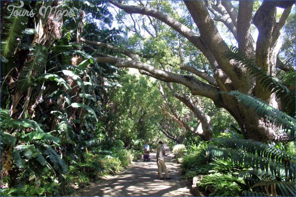 kirstenbosch national botanical garden trip itinerary 6 Kirstenbosch National Botanical Garden Trip Itinerary