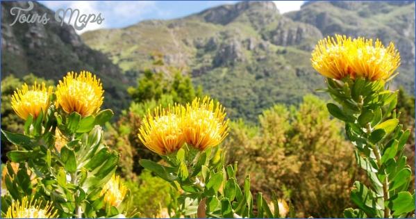 kirstenbosch national botanical garden trips 10 Kirstenbosch National Botanical Garden Trips