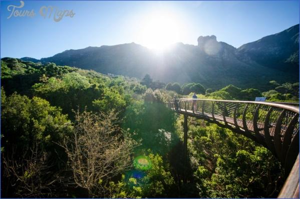 kirstenbosch national botanical garden trips 2 Kirstenbosch National Botanical Garden Trips