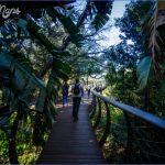 plan a trip to kirstenbosch national botanical garden 11 150x150 Plan A Trip To Kirstenbosch National Botanical Garden