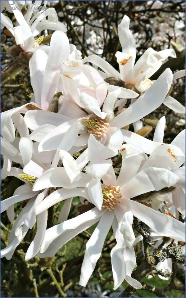 plan a trip to kirstenbosch national botanical garden 14 Plan A Trip To Kirstenbosch National Botanical Garden