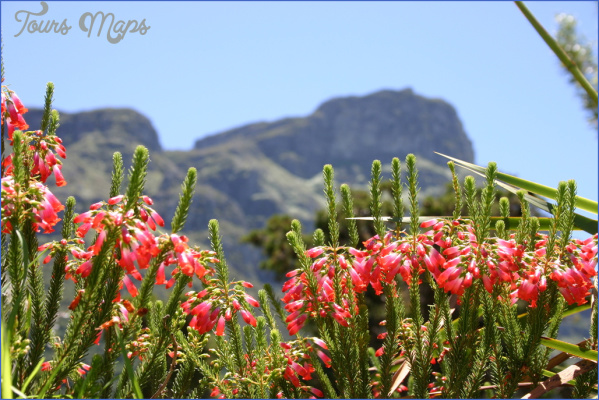 plan a trip to kirstenbosch national botanical garden 6 Plan A Trip To Kirstenbosch National Botanical Garden