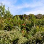 round trip flight to kirstenbosch national botanical garden 12 150x150 Round Trip Flight To Kirstenbosch National Botanical Garden
