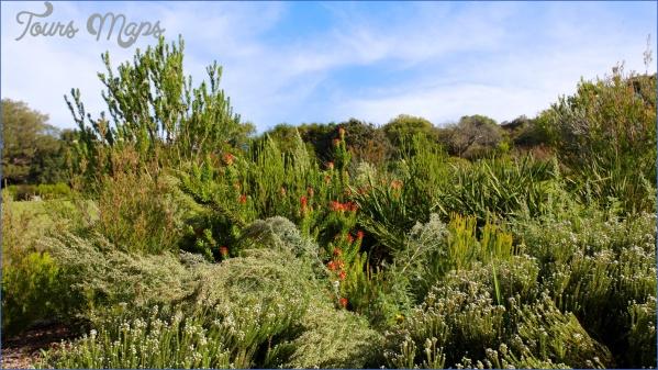 round trip flight to kirstenbosch national botanical garden 12 Round Trip Flight To Kirstenbosch National Botanical Garden