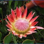 trip advisor kirstenbosch national botanical garden 3 150x150 Trip Advisor Kirstenbosch National Botanical Garden